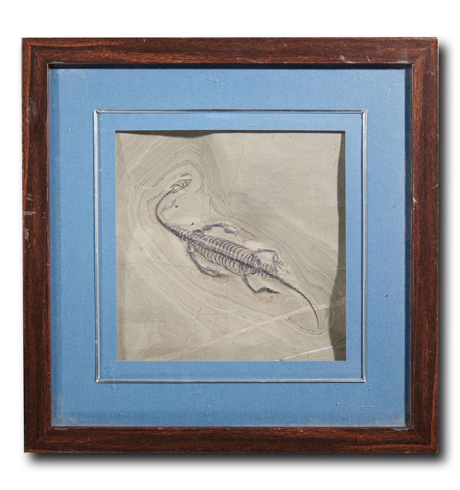 Lot 144: A framed Keichosaur fossil